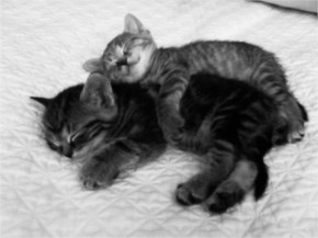 Cute Cat image -  Embrace