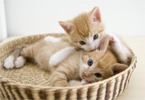 Cute Cat image- in basket