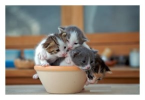 Cute Cat image kitten in cup