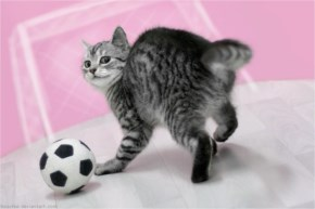 Cute Cat Image Playing Football
