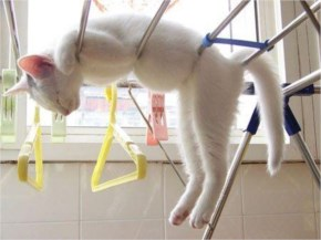 Cute Cat image Sleeping in the Weirdest Positions