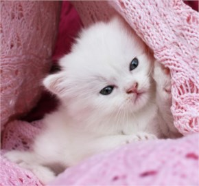 Cute Cat image - Soft