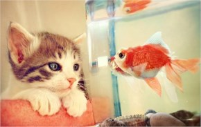 Cute Cat image-talking with fish