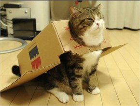 Cute Cat image  with Dressed as Superheroes