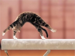 Cute Cat image with  exercise