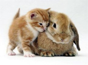 Cute Cat image with friend