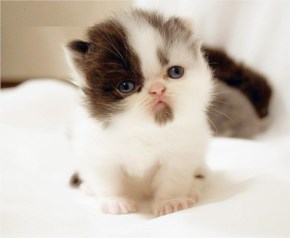 Cute Cat image with Thinking about her mom