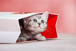 Cute Cat kitten image - Playing hide and seek in beg