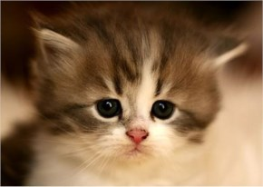 Cute Cat kitten image- Thinking