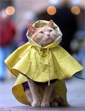 Cute Cate image with Wearing raincoat
