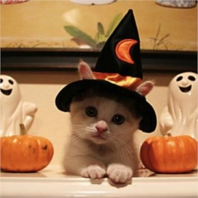 Cute Cats Images - Halloween