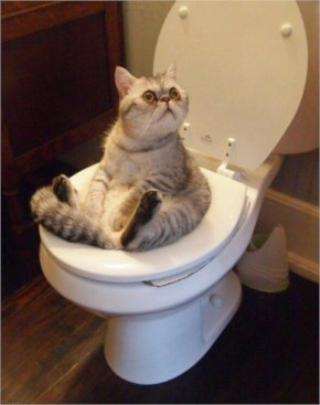 Funny cat is hanging out on the toilet