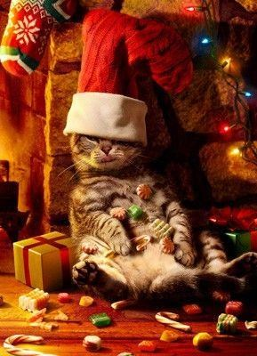 """Funny Christmas """"Cat in the Hat"""" -Too much Christmas """"CHEER"""""""