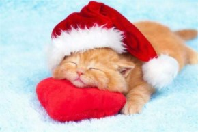 Funny Christmas - Cute kitten with Santa hat