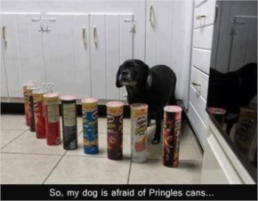 Funny Dog is afraid of pringles  cans