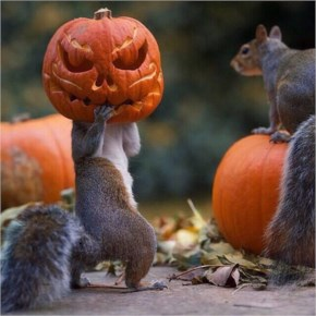 Funny Squirrels Are Killing Halloween