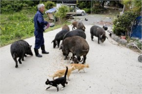 He fled at first but returned to take care of the animals that were left behind