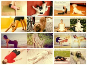 Join Yoga Classes by well-trained animals with a 20 unique exercises