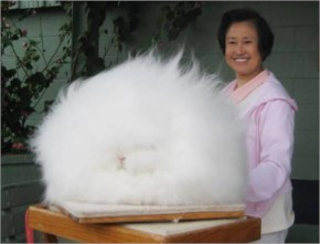The Rabbit that looks gorgeous with a oversized Fur coat around him