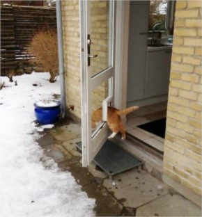 This cat who absolutely must use the cat door to get outside.