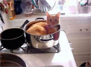 This cat who found a steel pot more comforting than a fluffy bed