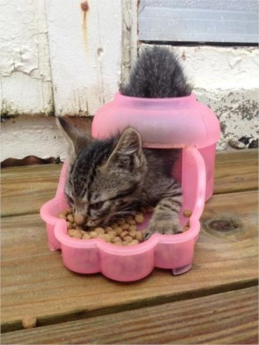 This cat who thought there was a need to get inside of a food bowl