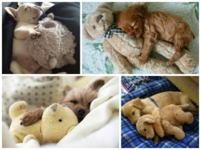 10 Cute and Adorable Puppies Hug With Their Stuffed Animals During Nap Time