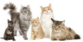 10 Most Popular Breeds of Cats
