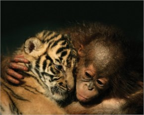 10 Totally Opposite Animals Build A True Friendship. Love Has No Bounds. Humans Need To Learn From This