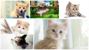 12 Cute Kitten Pictures that will make you say 'AWW'