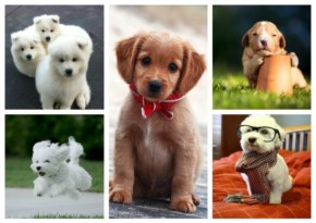 14 Cutest Puppies Which Make Your Day Brighter