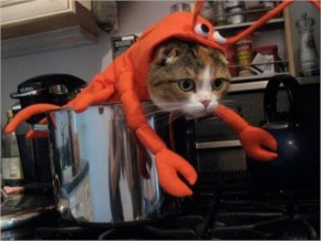 15 Hilarious Cats In Costumes – 1 Lobster Cat