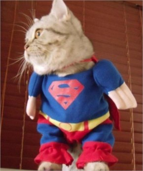 15 Hilarious Cats In Costumes – 2 Supercat