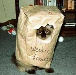 15 Hilarious Cats In Costumes – 4 Wookie Cat