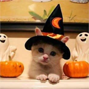 15 Hilarious Cats In Costumes – 5  Halloween Cat