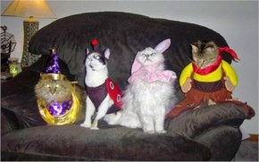15 Hilarious Cats In Costumes – 8 one awesome cat costume party