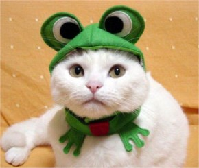 15 Hilarious Cats In Costumes – 10 Frog Cat