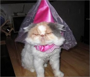 15 Hilarious Cats In Costumes – 12 Little Princess Costume Cat