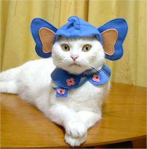 15 Hilarious Cats In Costumes – 14 Elephant Cat Costume