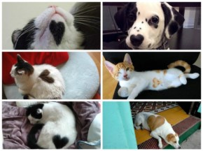 18 Cat and dog wearing Heart on their fur