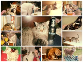 25 Funny Drunk Cat that make you laugh
