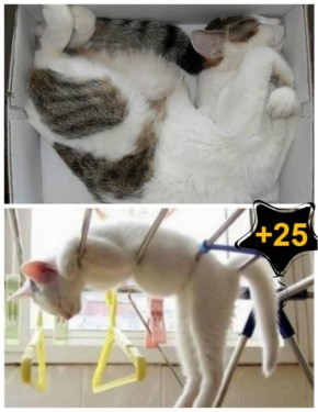 25 Photos of Cats Sleeping in Awkward Positions