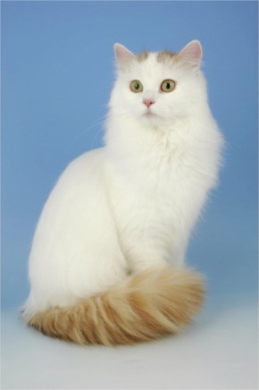 51 different types of Cats Breeds with their funny and cute look