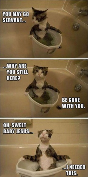 A Funny Pictures, Cat Taking A Bath