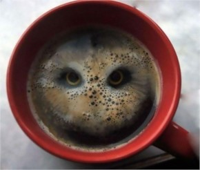 A guy dropped a pair of Hula Hoops into coffee and  saw a bird