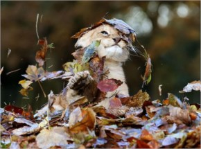 A Lion Cub Playing In Leaves