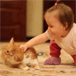 A Sweet Baby Catch  In  A  Cat… Curiosity Can Be Annoying