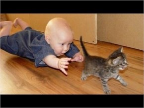 Adorable Play between Funny cats and Babies