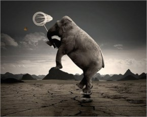 Amazing Funny Photo Manipulation Art Elephant