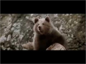 Amazing video shows courage of bear cub - never give up fight back